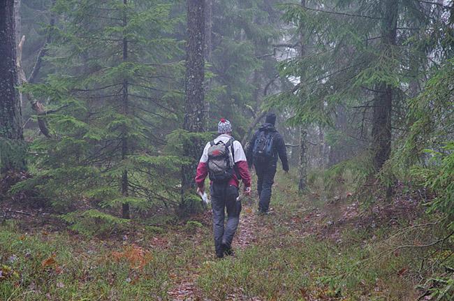 005 Tyst skog 1 minskad